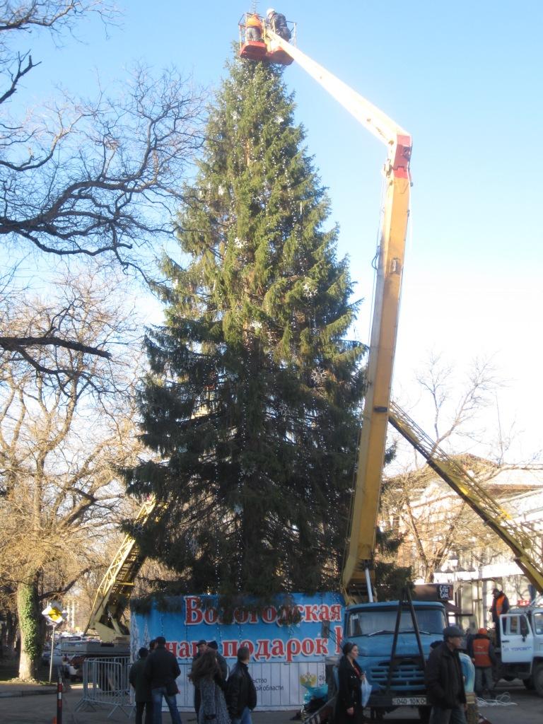 Живая елка в Симферополе