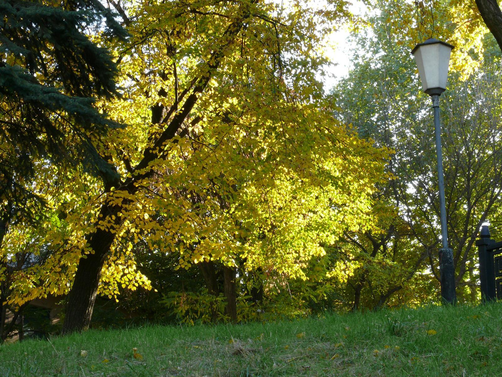 Осень наступила...