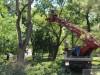 Симферопольский сквер объявили полным сухих и плохих деревьев(фото)