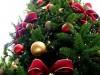 В Керчи новогодние елочки продают по 500 рублей за метр