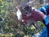 В Крыму из восьмиметрового колодца спасли котенка(фото)