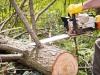 В Симферополе вырубят деревья и кусты, угрожающие многоэтажкам