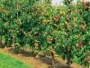 В Крыму заложат сад на 220 миллионов