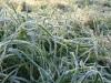 Завтра в Крыму возможны заморозки