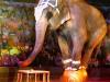 Сын Никулина против цирка в Севастополе