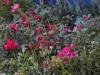 В Гагаринском парке Симферополя появятся голландские растения(фото)
