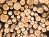 Мэрия Симферополя начнет продавать дрова