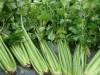 В Крыму захоронили 100 кило сельдерея
