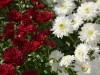 Улицы Евпатории украсили осенними цветами