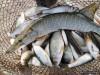 Украинские рыбаки заявили о краже улова крымскими пограничниками