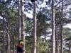 В Крыму сняли зависшего на огромных деревьях парапланериста(фото)