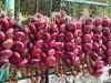 В Крыму вырастили самый сладкий ялтинский лук