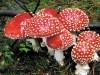 Крымские грибы официально посоветовали не есть