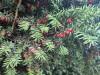 Озеленение Симферополя закажут ученым и студентам