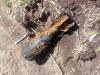В центре Симферополя откопали мину(фото)