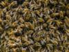 В Крыму обнаружили вороватых пчеловодов