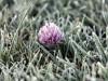Крым дождался майских заморозков