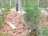 В эстонском лесу нашли тонну колбасы