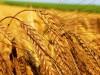 Европа на пороге продовольственного кризиса