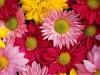 Цены на цветы перед праздниками необоснованно завышают - Миндоходов