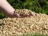 Могилев хочет греть бюджетников в Крыму биотопливом