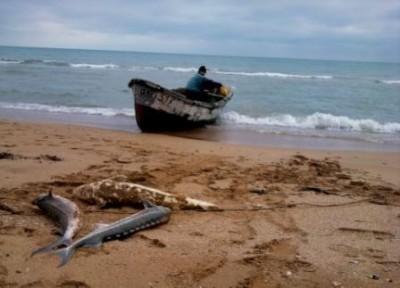 В Крыму осудили 4 браконьеров