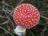 Симферопольцев предупреждают об отравлении грибами