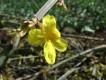 Весна в Симферополе