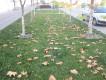 Осень в Симферополе