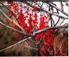 Осень и её краски