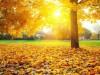 Осень окончательно пришла в Крым