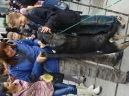 Шоу беспородных животных в Симферополе
